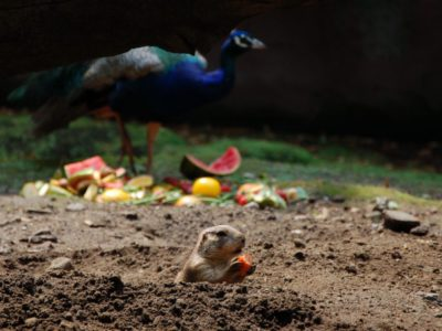 Romy Volders (°1998): tweede prijs met de foto 'Zoo, gezinsuitstapje'